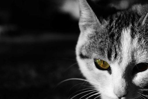 Cat, Pussycat, Pet, Feline Look, Brindle, Sweet