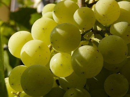 Berry, Cluster, Wine, Grapevine, Grape, Balls, Grapes