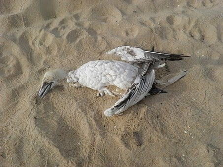 Bird, Dead Bird, Beach, Pollution, Conservation, Stork