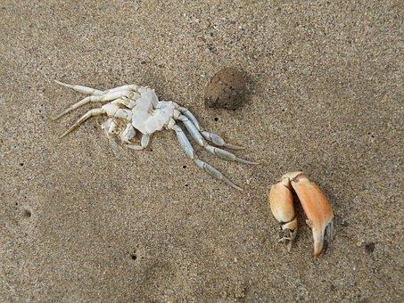 Crab, Dead, Claw, Crustacean, Ocean, Beach, Sand