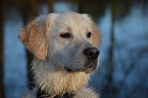Dog, Dog Runs, Animal, Nature, Fun, Dog Human