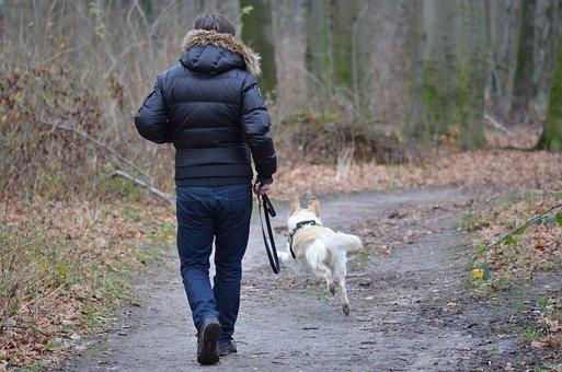 Leisure, Pet Photography, Dog, Dog Runs, Animal, Nature
