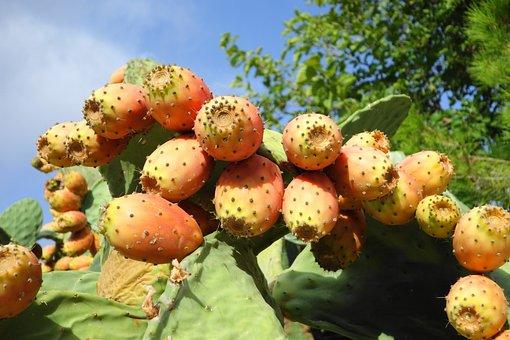 Prickly Pear, Fruits, Vegetables, Fig, Food