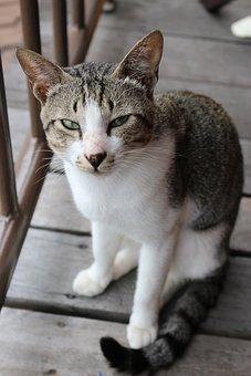 Cat, Wood, Cute, Grey, Kitten, Floor, Animal, Pet