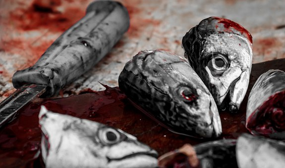 Fish, Bloody, Head, Meat, Food, Death, Blood, Dead