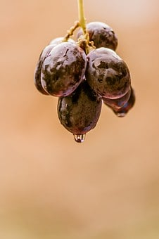 Grapes, Black, Food, Fruit, Wine, White, Red, Vine