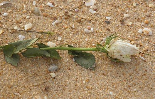 Rose, Shipwreck, Death, Beach, Funeral At Sea