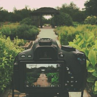 Canon Rebel T4i, Dslr, Garden, Path, Nature, Vintage