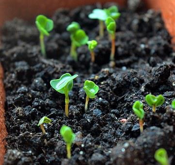 Sprouts, Seedling, Seedlings, Green Leaves, Why