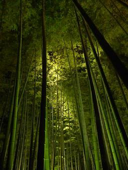 Bamboo Forest, Kyoto, Kodai-ji Temple, Green Light