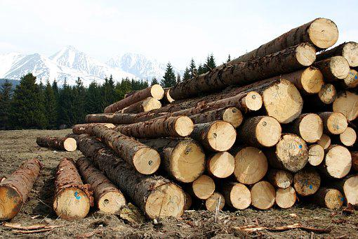 Wood, High, Tatry, Calamity, Felling, Logs, Autumn