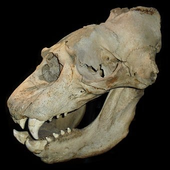 Skull, Skeleton, Bones, Death, Horror, Dead, Spooky