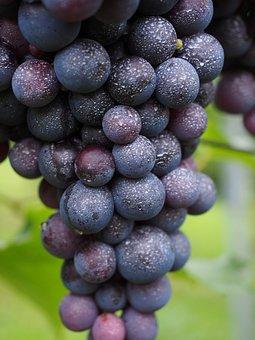 Wine Berries, Inoculated, Spray, Pesticidal, Toxic