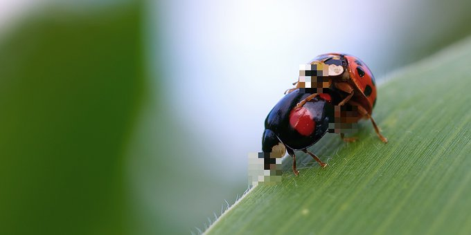 Ladybug, Two, Social Networks, Pixelated, Protected