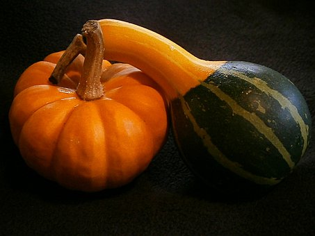 Pumpkin, Gourd, Mini Pumpkins, Miniature Pumpkin