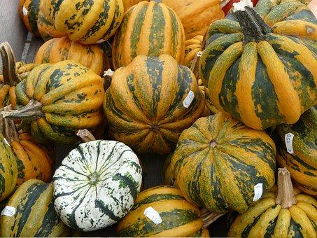 Giant Pumpkins, Pumpkin, Pumpkin Art, Pumpkin Varieties