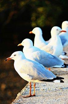 Seagulls, Ocean, Bird, White, Gull, Nautical, Beach