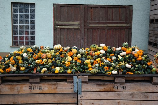 Pumpkins, Decorative Squashes, Storage, Sale, Mass