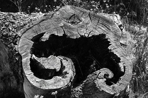 Tree, Stump, Cut, Nature, Wood, Natural, Trunk, Plant