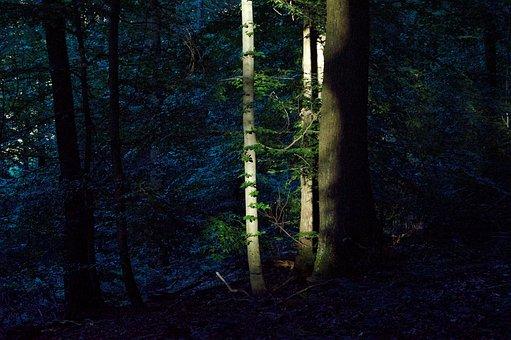 Last Sunbeam, Abendstimmung, Forest, Trees, Sunset