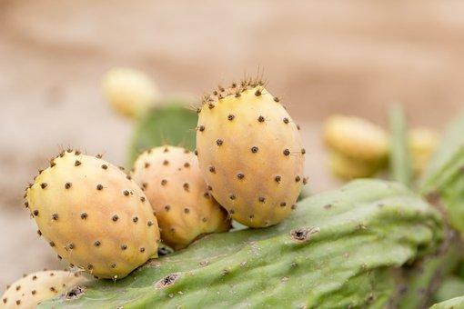 Prickly Pear, Sweet, Thorns, Food, Cactus, Skewers