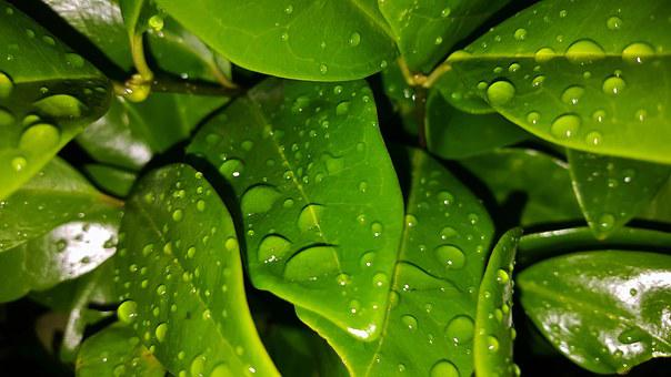Leaves, Shrub, Green, Wet, Water, Water Droplets