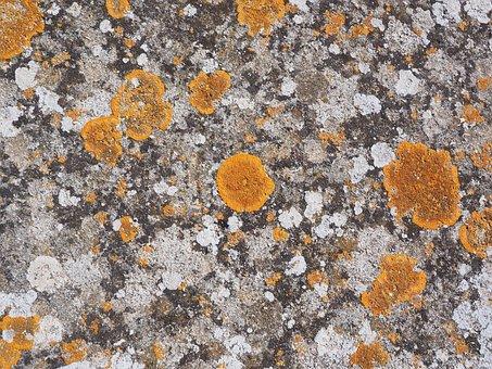 Stone, Weave, Orange, Ordinary Gelbflechte