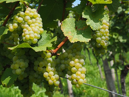 Wine Berries, Grapes, Berries, Green, Juicy, Pods