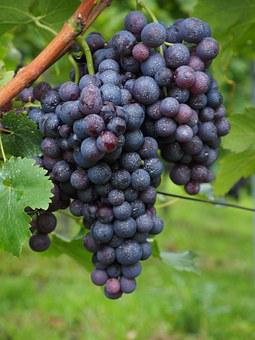 Wine Berries, Inoculated, Spray, Pesticidal, Toxic