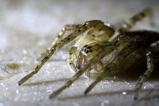 Spider, Macro, Close, Baby Spider