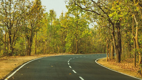 Green, Road, Outdoor, Travel, Forest, Road Trip