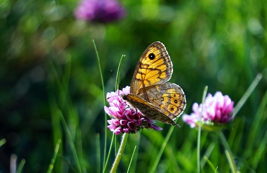 Butterfly, Insect, Nature, Colorful, Lepidopteran