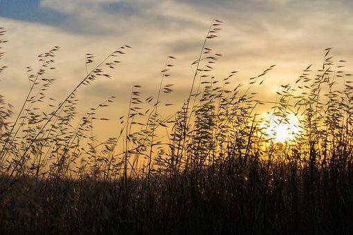 Landscape, Sunset, Spikes, Sun, Summer, Sky, Sunlight