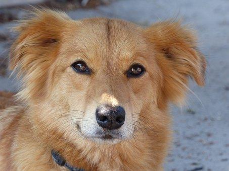 Dog, Dogs, Pet, Sweet, Nature, Animal, Portrait