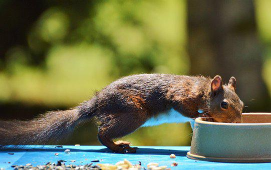 Squirrel, Nager, Rodent, Brown, Nut, Possierlich, Gnaw