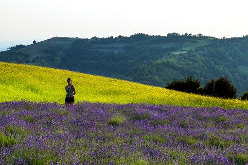 Lavender, Sale San Giovanni, Field, Wheat