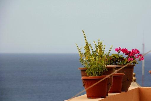 Flowers, Pot, Sea, View, Herbs, Pots, Flowerpot