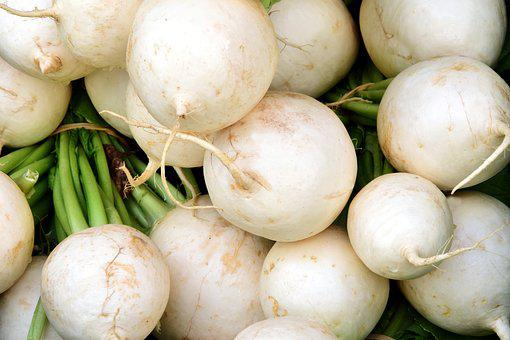Radish, White, White Radish, Vegetables, Healthy, Radix