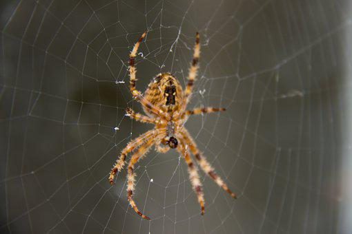 Spider, Network, Web, Nature, Animal, Life