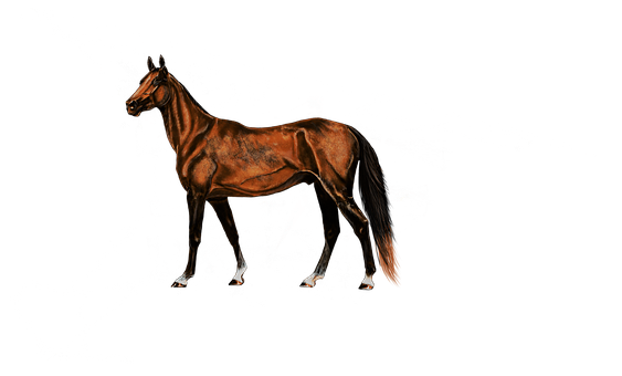 Painting, Digital Artwork, Horse, Art, Drawing, Animal