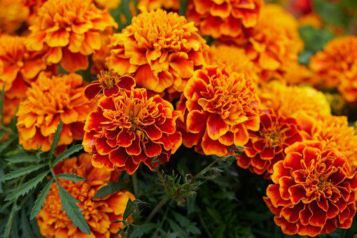 Flower, Blossom, Bloom, Yellow, Orange, Red, Fire