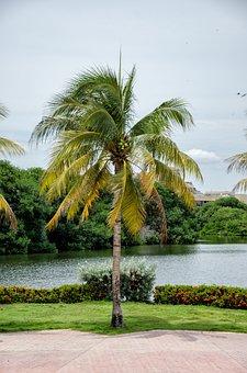 Colombia, Caribbean, Cartagena, Palm, Holiday, Sun
