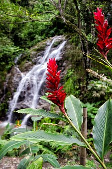 Colombia, Minca, Waterfall, Nature, Flowers, Plant