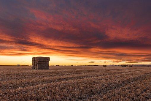 Field, Agriculture, Harvest, Village, Corn, Hay, Rye