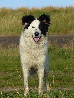 Dog, Dogs, Crossing, Rasloos, Russian, Rescue