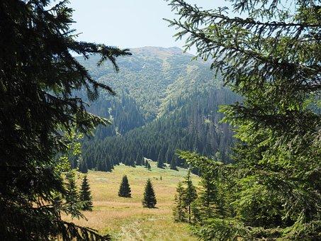 Mountains, Polyana, Nature, Tatry, Poland, Landscape