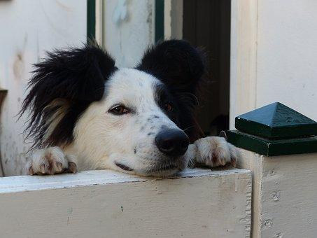 Dog, Dogs, Fence, Edge, Black, White, Black White