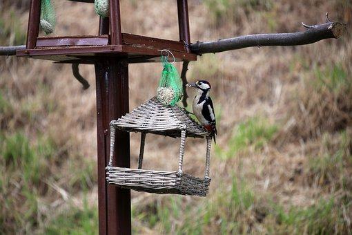 Great Spotted Woodpecker, Bird, Woodpecker