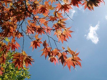 Bodnant Gardens, Tree, Leaves, Sky, Blue, Nature, Leaf