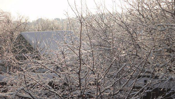 Winter, Village, Snow, Cold, Frost, Countryside, Tree